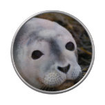 Harbor Seal Candy Tins