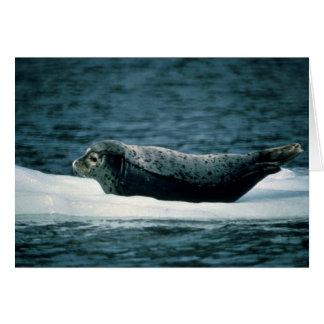 Harbor Seal Card