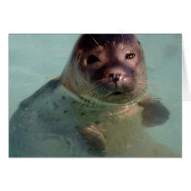 Harbor Seal Greeting Card