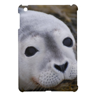 Harbor Seal Case For The iPad Mini