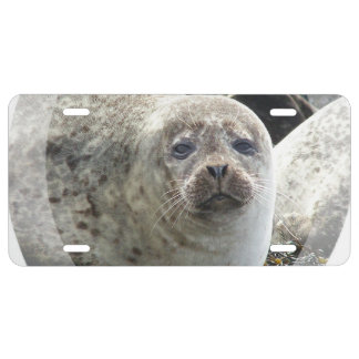 Harbor Seal License Plate