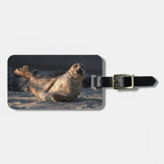 Harbor seal on beach luggage tag