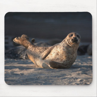 Harbor seal on beach mouse pad