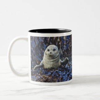 Harbor Seal (Phoca vitulina) Two-Tone Coffee Mug