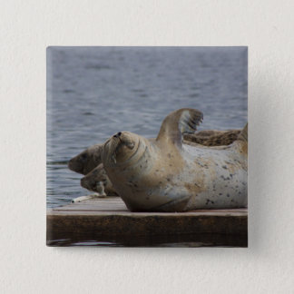 Harbor seal pinback button