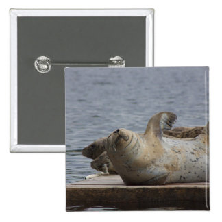 Harbor seal pinback button