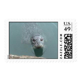 Harbor Seal Postage
