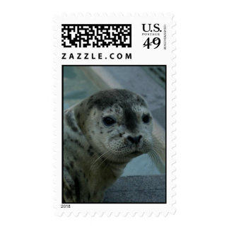 Harbor Seal Postage Stamps