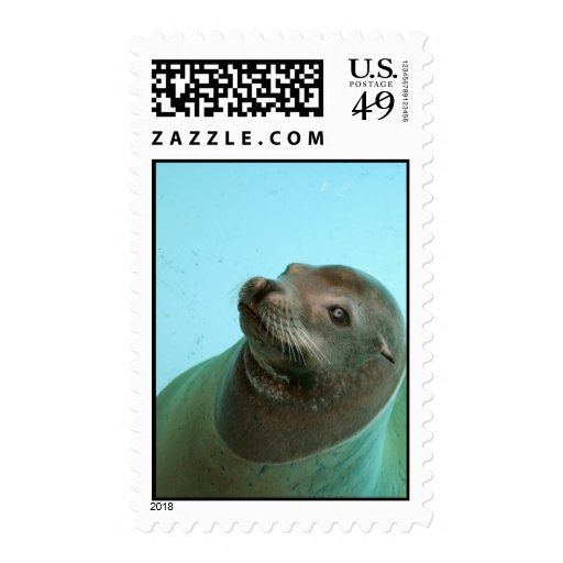 Harbor Seal Stamp