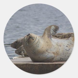 Harbor seal stickers