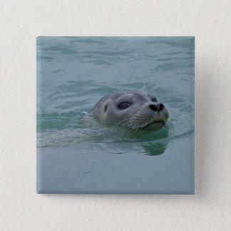 Harbor Seal swimming in Jokulsarlon glacial lake Button