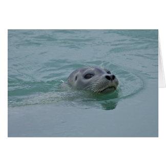 Harbor Seal swimming in Jokulsarlon glacial lake Greeting Cards