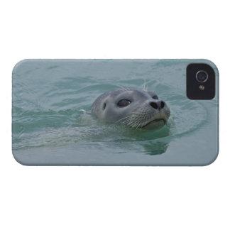 Harbor Seal swimming in Jokulsarlon glacial lake Case-Mate iPhone 4 Case