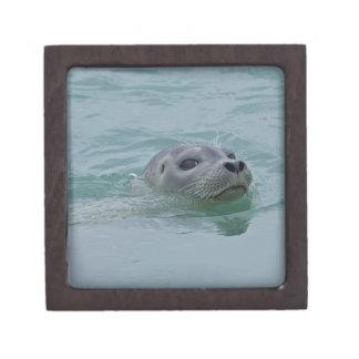 Harbor Seal swimming in Jokulsarlon glacial lake Keepsake Box