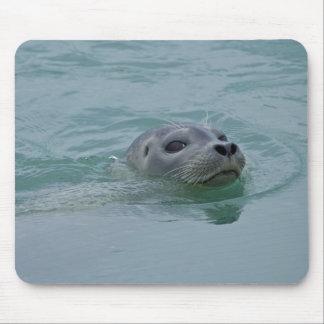 Harbor Seal swimming in Jokulsarlon glacial lake Mouse Pad