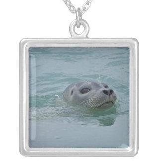 Harbor Seal swimming in Jokulsarlon glacial lake Necklaces