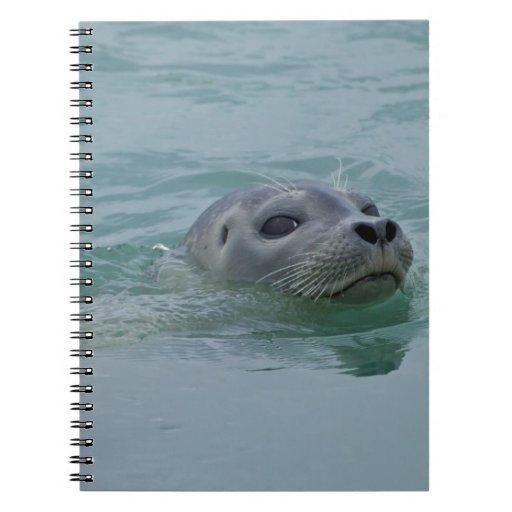 Harbor Seal swimming in Jokulsarlon glacial lake Notebook