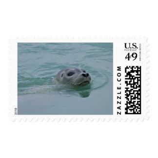 Harbor Seal swimming in Jokulsarlon glacial lake Postage Stamp