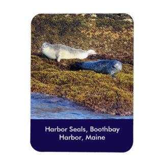 Harbor Seals, Boothbay Harbor Maine Magnet