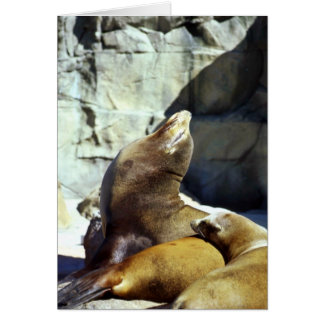 Harbor seals card