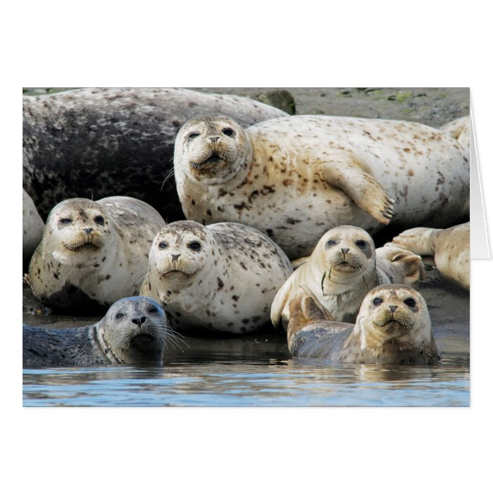Harbor Seals Hauled Out on Sandy Beach Card