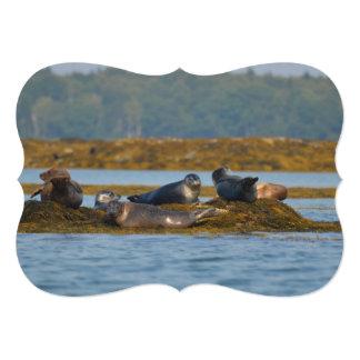 Harbor Seals in Maine 5x7 Paper Invitation Card