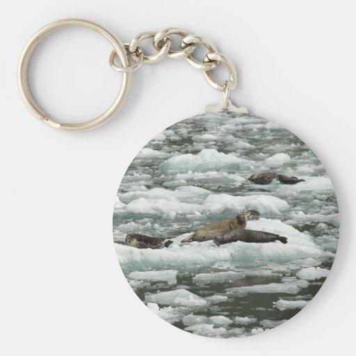 Harbor Seals Key Chains