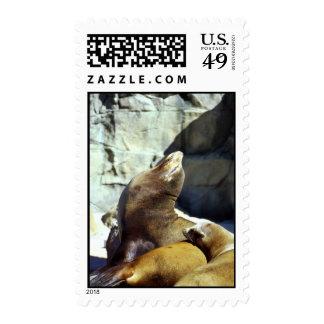 Harbor seals postage stamps