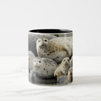 Harbor Seals Two-Tone Coffee Mug