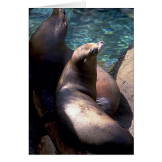 Harbor Seals W/ Heads Up Greeting Cards