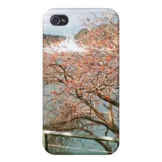 Harbor Tree iPhone 4 Covers