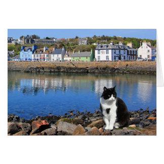 Harbour Cat, Portpatrick, Scotland Greeting Card