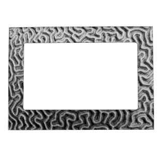 Hard Coral Magnetic Picture Frame II