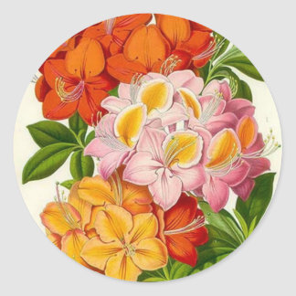 Hardy Azaleas by Sir Joseph Paxton Classic Round Sticker