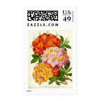 Hardy Azaleas by Sir Joseph Paxton Postage Stamps