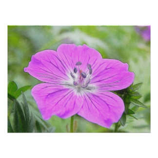 Hardy Geranium In Bloom Posters