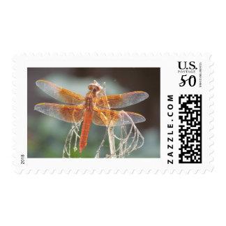 Hardy Postage