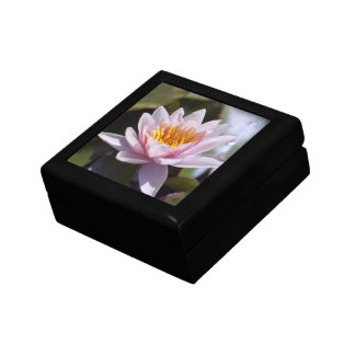 Hardy Water Lily Gift Box