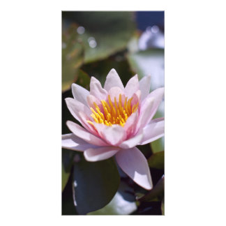 Hardy Water Lily Photo Card