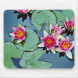 Hardy water lily, red, Nymphaea laydekeri  flowers Mouse Pad