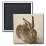 Hare, 1502 2 inch square magnet
