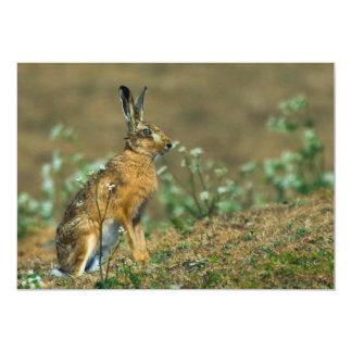 Hare Invitation
