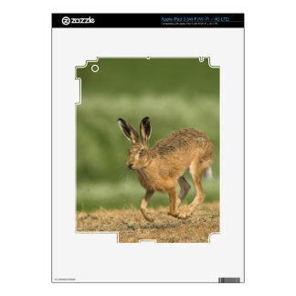 Hare iPad 3 Skin