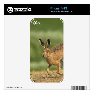 Hare iPhone 4 4S Skin Decal For iPhone 4S