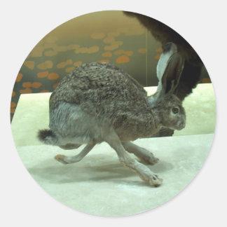 Hare (non-Krishna) running. Taxidermy specimen. Classic Round Sticker