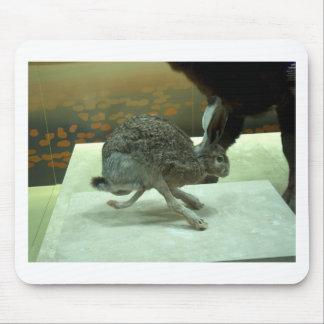 Hare non-Krishna running Taxidermy specimen Mouse Pad