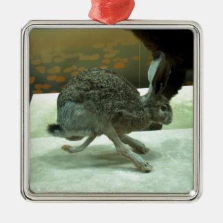 Hare (non-Krishna) running. Taxidermy specimen. Square Metal Christmas Ornament