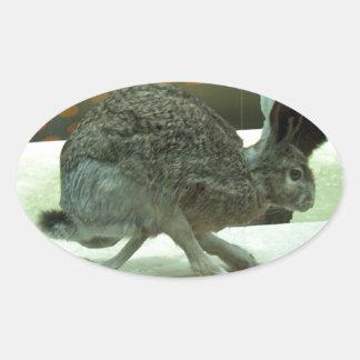 Hare (non-Krishna) running. Taxidermy specimen. Oval Sticker