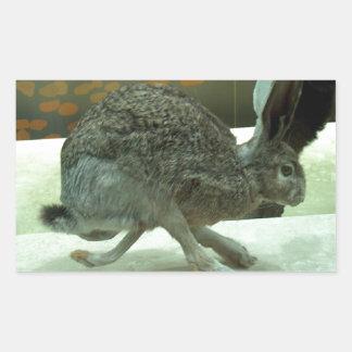 Hare (non-Krishna) running. Taxidermy specimen. Rectangular Sticker