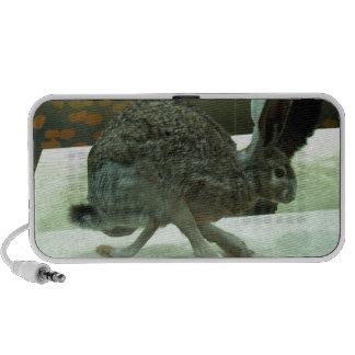 Hare (non-Krishna) running. Taxidermy specimen. Travel Speaker